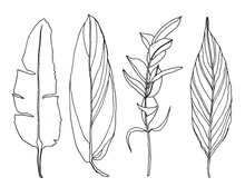 Palm Leaves Pen Handrawn Illus...