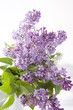 the Blue lilac on a wooden white table