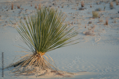 A tree sprouts life and pushes upward in a dry desert #163508490