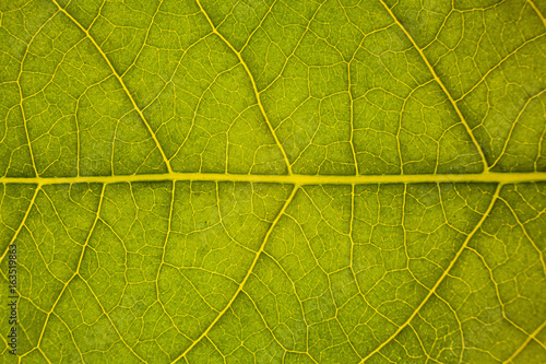 Blur green leaf texture for background indicating love for mother nature and pollution free #163519863