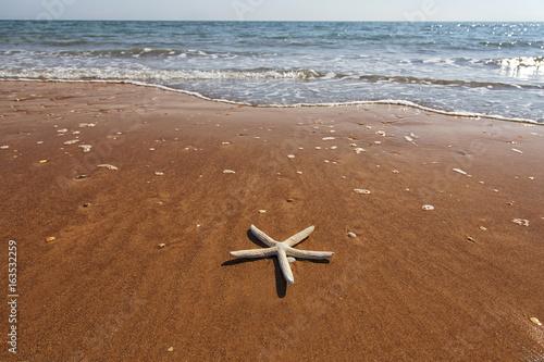 Spiaggia con stella marina appoggiata sulla riva del mare Poster