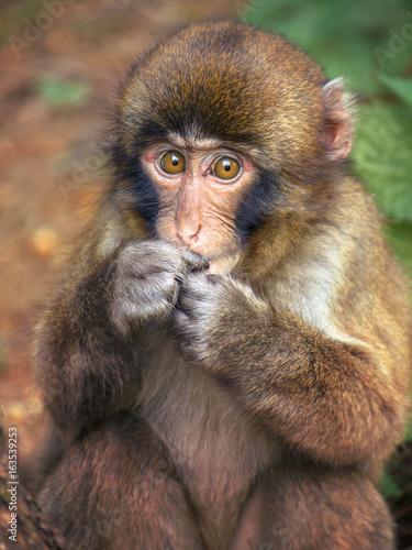 In de dag lovely puppy monkey, cute vulnerable animal