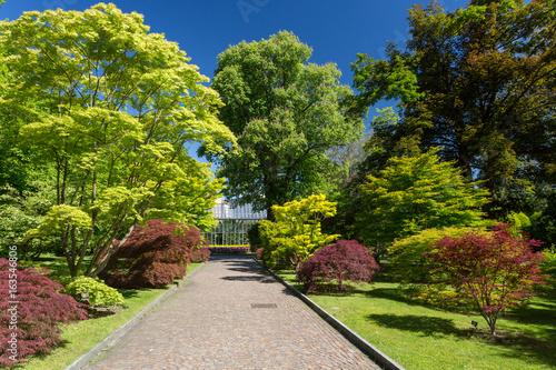 Foto op Canvas Tuin Forêt d'érables dans le parc