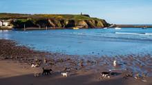 Dogs On Summerleaze Beach
