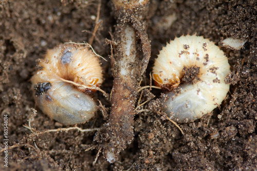 Cuadros en Lienzo Pests control, insect, agriculture