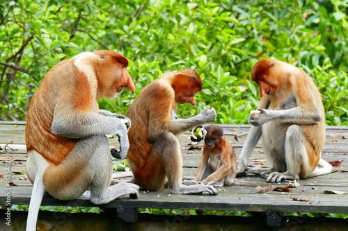 Foto op Plexiglas Indonesië Beautiful monkey Nasalis larvatus against a background of tropical island jungle