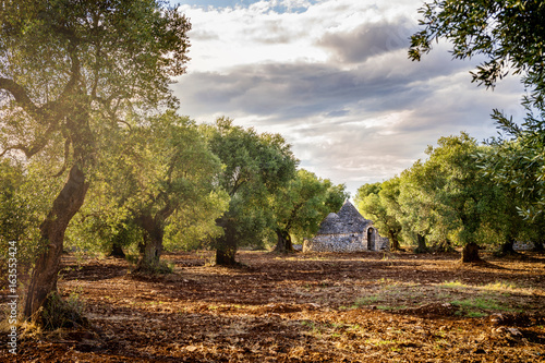 Fotomural Trulli with olive grove. Val d'Itria - Puglia (Apulia) - Italy