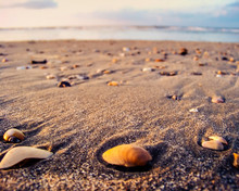 Closeup Of Seashells And Beach...