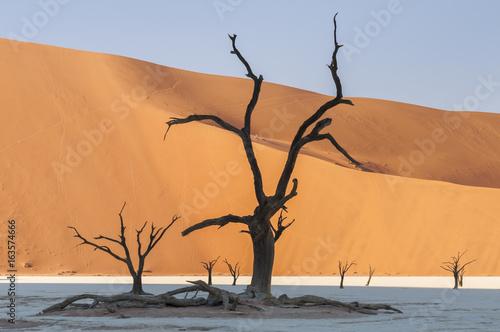 Fotografie, Obraz  Dead acacia trees and dunes in the Namib desert / Dunes and dead acacia trees in the Namib desert, Dead Vlei, Sossusvlei, Namibia, Africa
