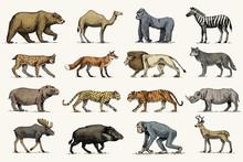 Gorilla, Moose Or Eurasian Elk...