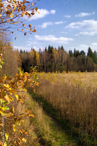 Foto op Canvas Herfst autumn landscape with forest and field at sunny evening.