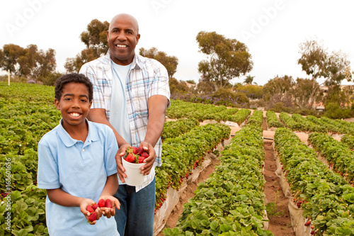 Father and son picking strawberries outside. Fototapeta