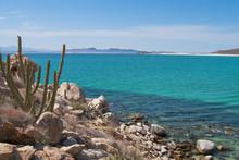 Isla Espiritu Santo, La Paz Ba...