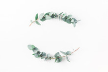 Eucalyptus On White Background...