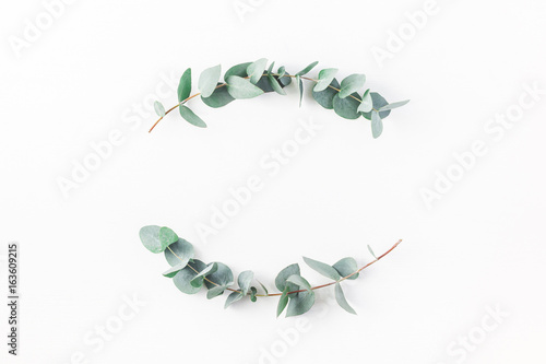 Photo  Eucalyptus on white background