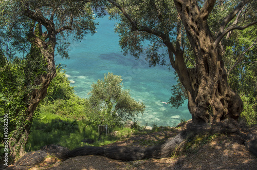 Fotoposter Olijfboom Olive tree with sea in background - Lichnos beach, Greece