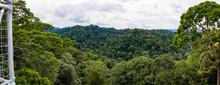 Panorama Virgin Rainforest, Ul...