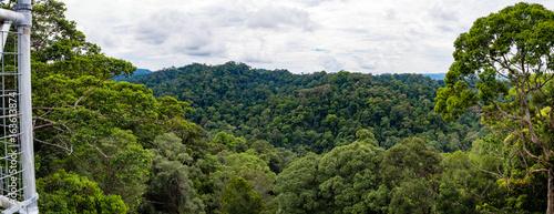 Fotografia Panorama Virgin Rainforest, Ulu Temburong National Park, Brunei taken from canop