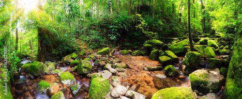 Photo  Beautiful 180 degree panorama of a stream in the rainforest jungle of the Masoal
