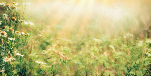 Beautiful late summer outdoor nature background with Wild herbs and