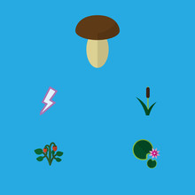 Flat Icon Bio Set Of Cattail, Lotus, Lightning And Other Vector Objects. Also Includes Champignon, Lightning, Lily Elements.