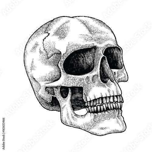 Skull hand drawing engraving illustration © channarongsds