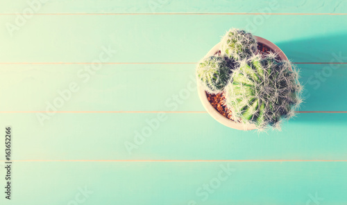 Foto op Canvas Cactus Potted cactus house plant on wooden table