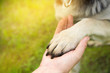 canvas print picture - a man holds the paw of the dog in the Park in the summer at sunset. the concept of friendship, teamwork, love