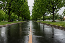 Wet Tree Lined Road In Spring