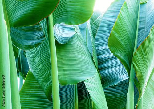 熱帯植物 Fotobehang