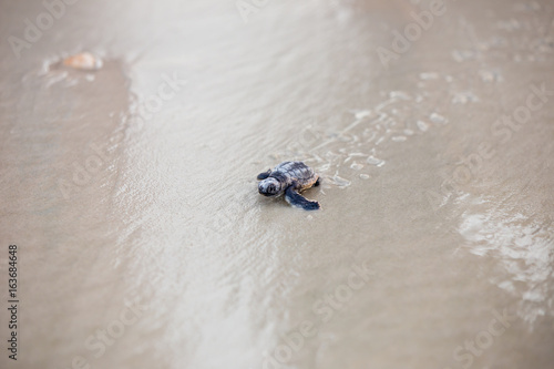 Cadres-photo bureau Tortue Baby Sea Turtle