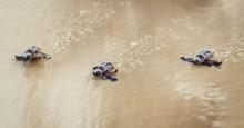 Sea Turtle Siblings