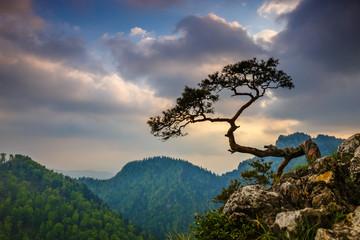 Obraz na Szkle Góry Sokolica peak in Pieniny Mountains with a famous pine at the top, Poland