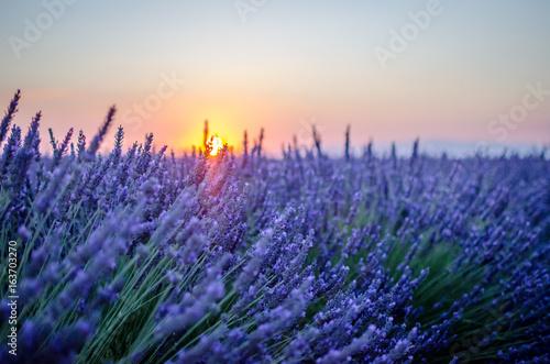 Montage in der Fensternische Lavendel valensole,sud France,lavande,coucher de soleil
