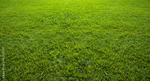 Foto auf Gartenposter Gras Background of beautiful green grass pattern