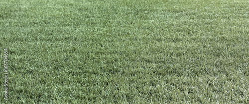 Deurstickers Droogte The dry green grass and dry grass summer fields straw