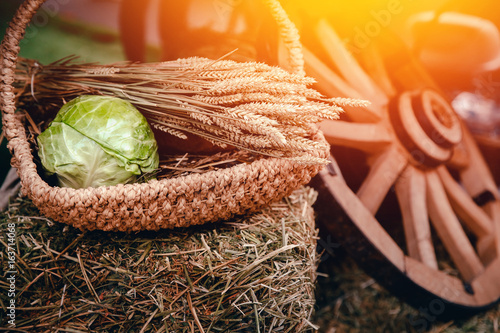 Fotografía  Still life of peasant food: in a basket of cabbage, ears of wheat and oats