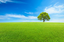 Green Grass And Tree Under The Blue Sky