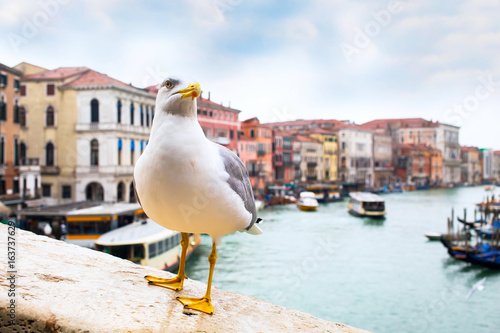 Fototapeta Albatross at Rialto Bridge and Venice houses and canal on the background, Italy