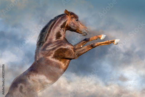 Red stallion with long mane rearing up against clouds of dust
