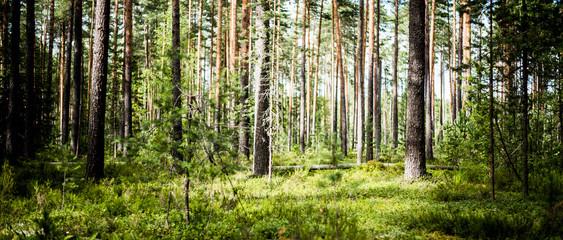 Fototapeta na wymiar Ecology background outdoor landscape