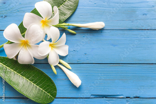 Foto op Plexiglas Frangipani Beautiful white flower and green leaves on blue wooden table on top view.Background and Copy space. Plumeria Flower.