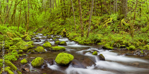 Deurstickers Rivier Gorton Creek in lush rainforest, Columbia River Gorge, USA