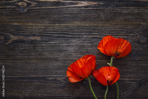 Poster Poppy Red poppies flowers on dark wood background.