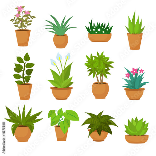 Fotografie, Obraz Indoor and outdoor landscape garden potted plants isolated on white