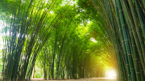 Tuinposter Bamboe Tunnel bamboo tree with sunlight.