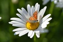 Красивая бабочка сидит на цветке и собирает нектар