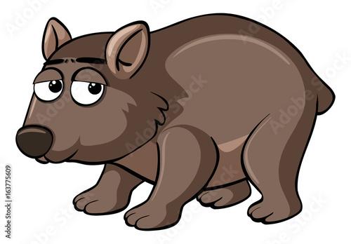 Poster de jardin Zoo Brown wombat with sad face