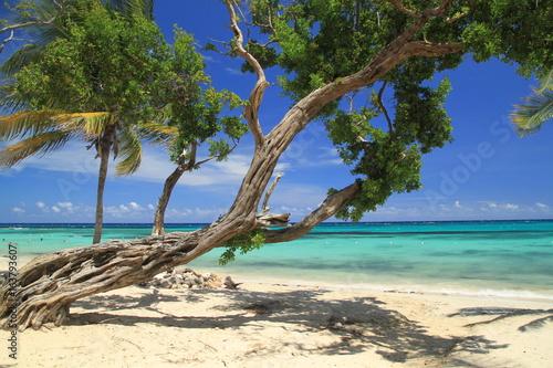 Photographie jamaica beach sea sky tree