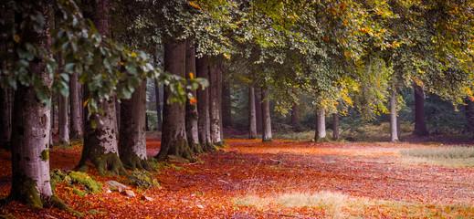 Fototapeta na wymiar Autumn